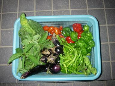 収穫11_09_11