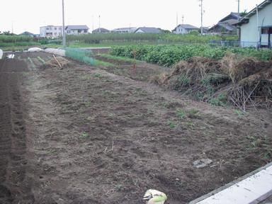 スイカ畑撤収11_09_17