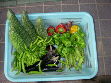 収穫11_09_18