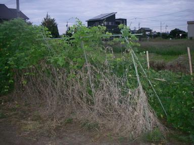 キワーノ11_09_26