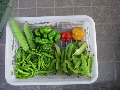 収穫11_09_25