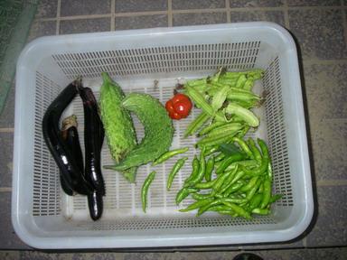 収穫11_09_26