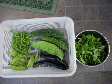 収穫11_09_29