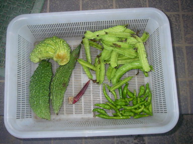 収穫11_09_28