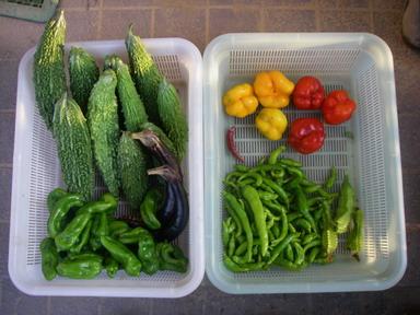 収穫11_10_09