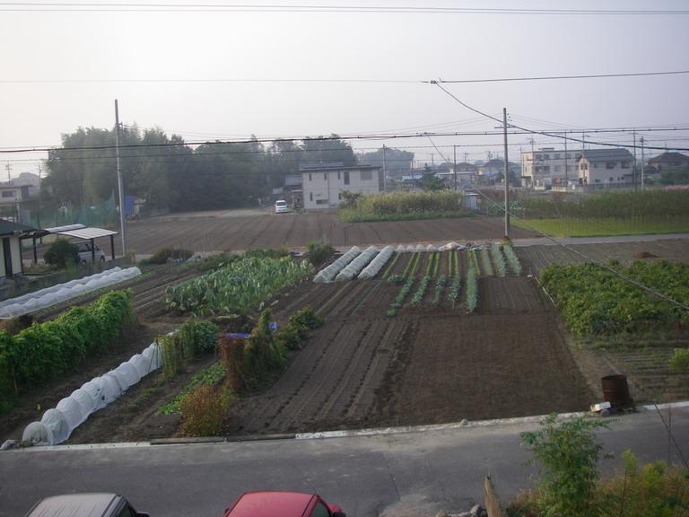 畑の様子11_10_12