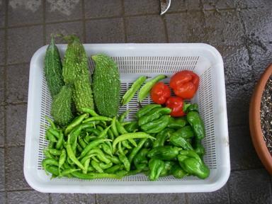収穫11_10_22