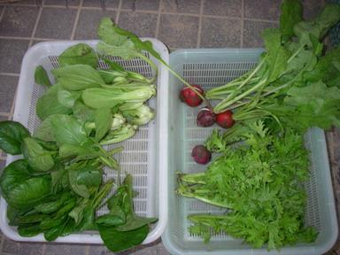 収穫11_10_25