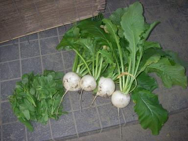 収穫2_11_10_28