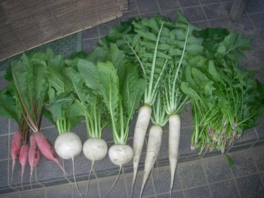 収穫11_10_29