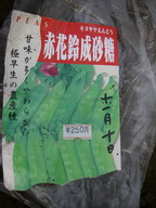 エンドウ【赤花鈴成砂糖】11_11_09