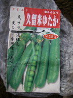 エンドウ【久留米ゆたか】11_11_09