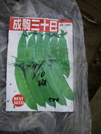 エンドウ【成駒三十日】11_11_09