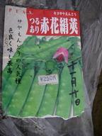エンドウ【赤花絹莢】11_11_09