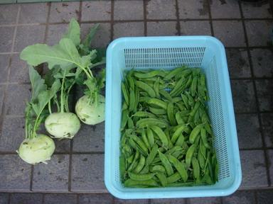 収穫11_11_20