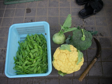 収穫11_12_03