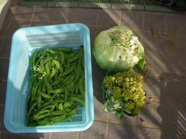 収穫11_12_10