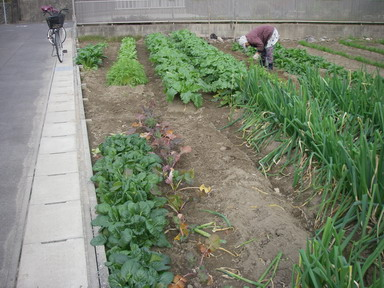 菜園№3_5_11_12_18