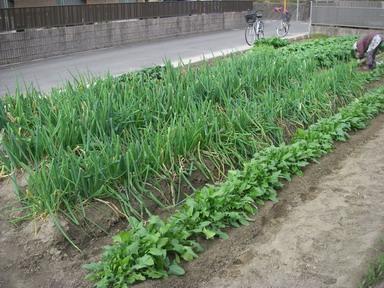 菜園№3_4_11_12_18