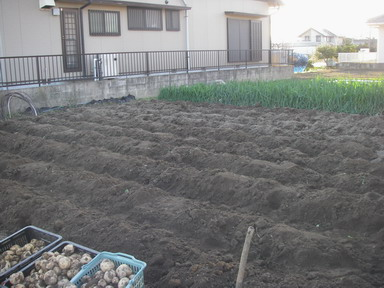 ジャガイモ収穫後11_12_23