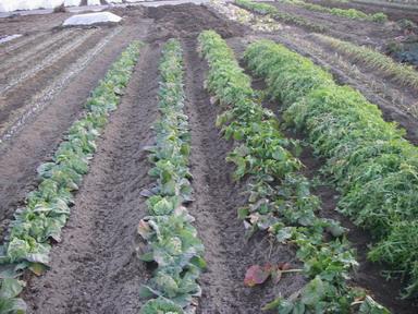 追肥と土寄せ6_12_02_11