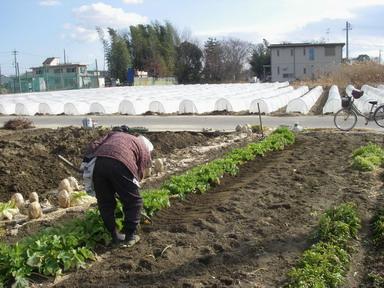 追肥と土寄せ4_12_02_11
