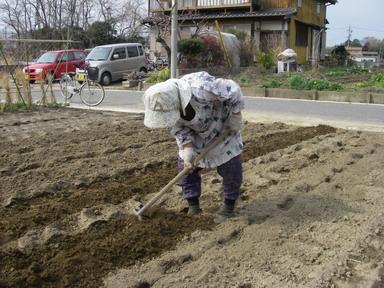 ジャガイモ畝作り4_12_03_11