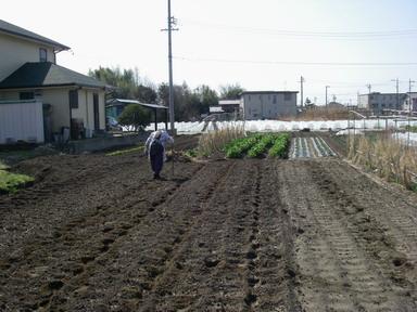 ジャガイモ畝作り1_12_03_11