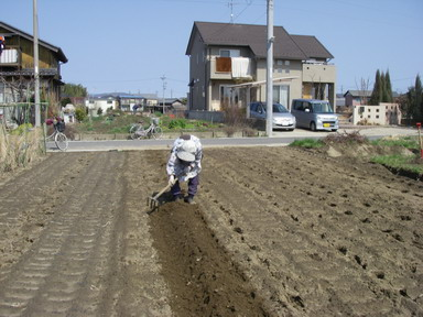 ジャガイモ畝作り2_12_03_11