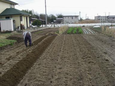 ジャガイモ畝作り3_12_03_11