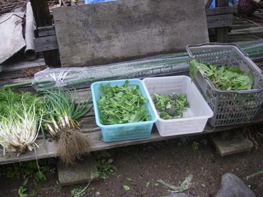 収穫12_03_18
