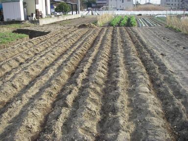 ジャガイモ植え付け完了12_03_20