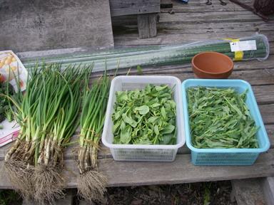 収穫2_12_04_01