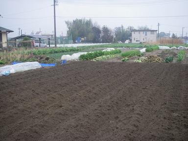 里芋畝作り12_04_11