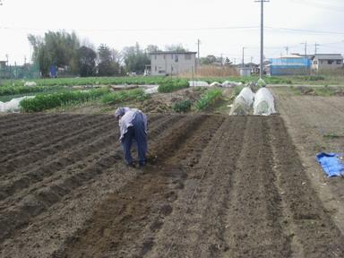 里芋畝作り12_04_15