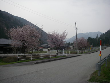 桜12_04_25