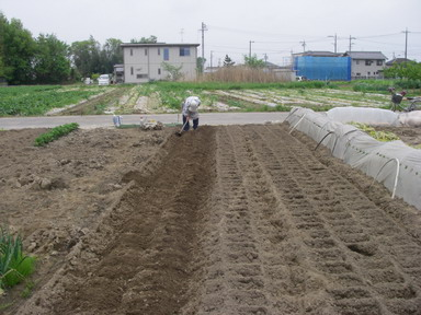 トマト畝作り1_12_04_30