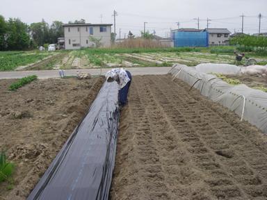 トマト畝作り3_12_04_30