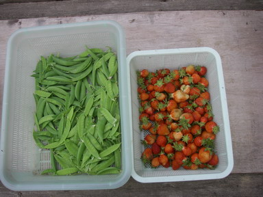 収穫12_05_06
