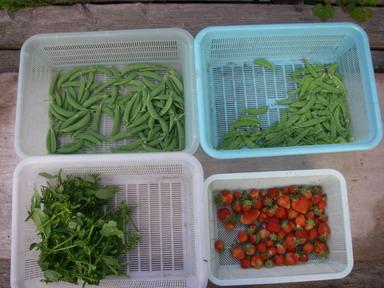 収穫12_05_07