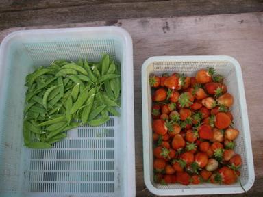 収穫12_05_08