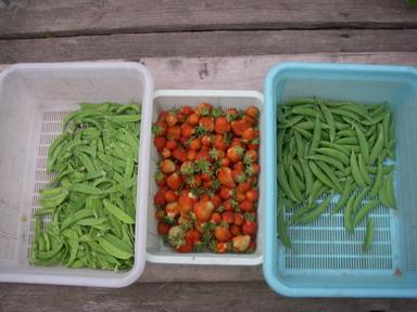 収穫12_05_09