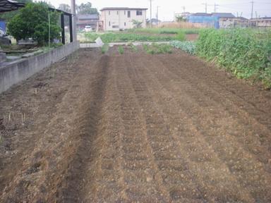 ネギ用畝作り12_05_10