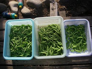 収穫12_05_13