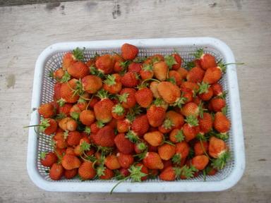 収穫12_05_17