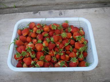 収穫12_05_19