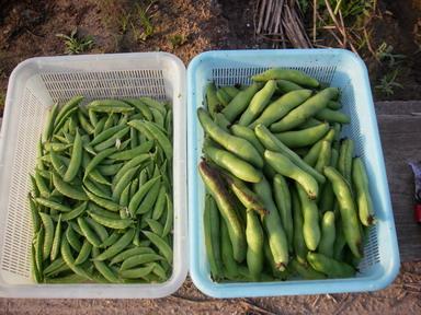 収穫12_05_23