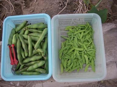 収穫12_05_27