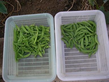 収穫12_05_29