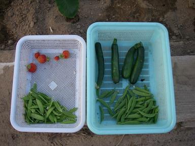 収穫12_06_07
